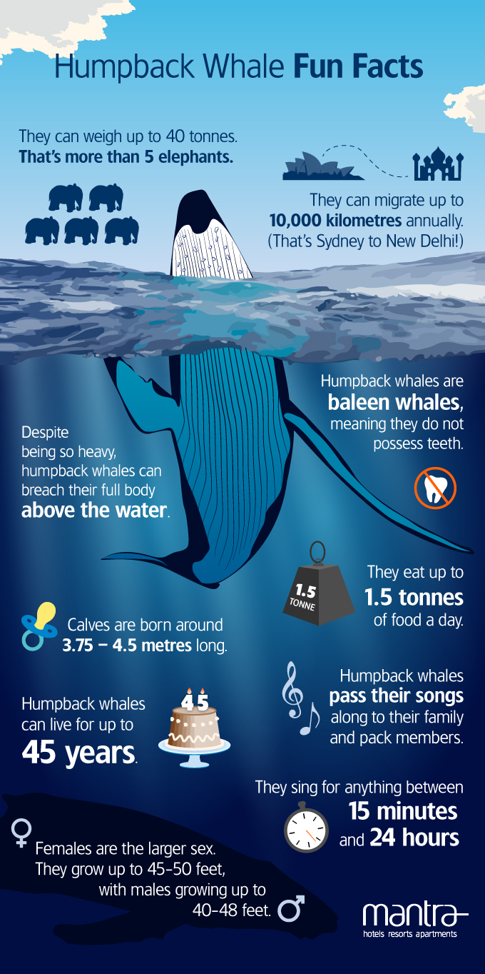 Humpback Whale Fun Facts! - Mantra