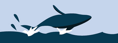Infographic: Whale Watching in Queensland
