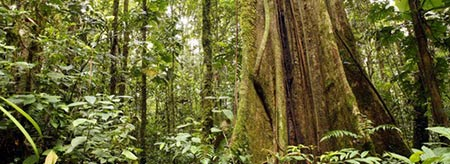 Visit Tropical North Queensland rainforests