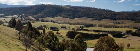 Get to know Melbourne: Take a day trip to Healesville