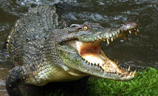 Get up close with a croc in Darwin.