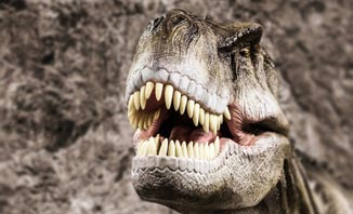 See the majestic tyrannosaurs in a new exhibition in Sydney.