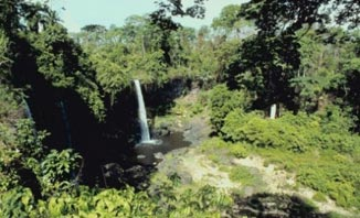 : Waterfalls are just one of the amazing features you'll get to see on a Springbrook National Park tour