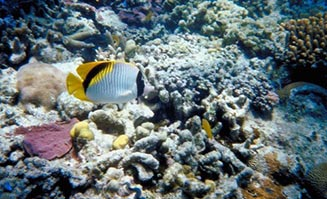 The Great Barrier Reef is one of Cairns' most popular attractions.