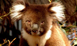 Get up close to the friendly critters at wildlife parks on the Gold Coast