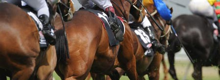 Don't miss the 2013 Melbourne Cup!