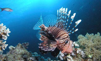 Learn to scuba dive in Port Douglas