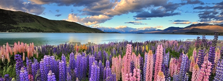 3 must do activities in New Zealand's South Island