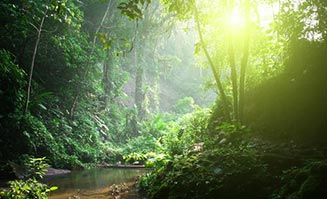 Some of these rainforest walking tracks are so beautiful you'll feel like you're on a movie set!
