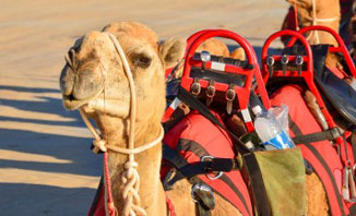 Take a camel ride this summer in Broome and see a different side of the town.