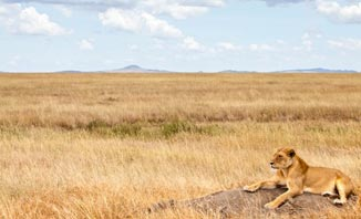 The Lion King musical is set in the majestic Serengeti Plains.